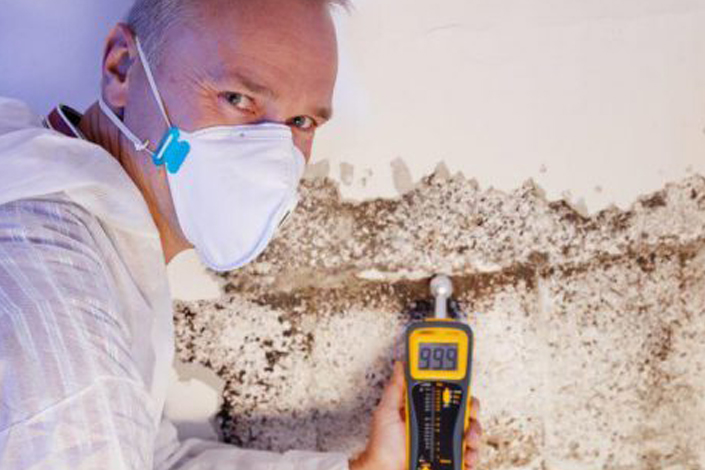 Mold Removal Torrance CA